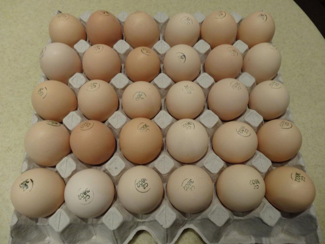 Яйцо голошейных кур