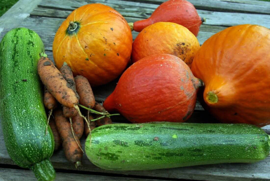 Овощи в качестве добавки для откорма бройлеров
