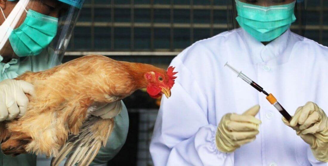 Ветеринар в птичнике