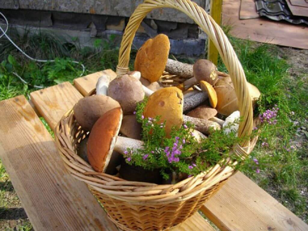 5 простых способов как вырастить грибы на даче, инструкция для начинающих