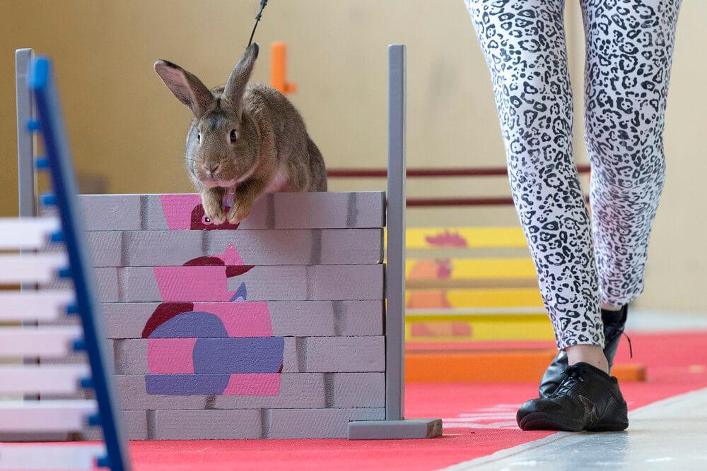 Кролик выполняет трюк