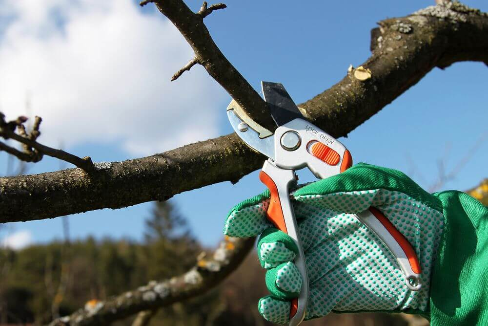 Когда необходимо обрезать плодовые деревья и как это сделать правильно
