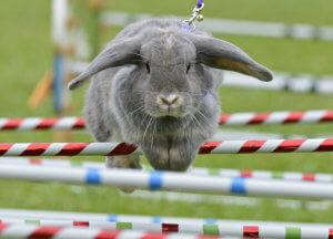Можно ли дрессировать декоративного кролика и как это сделать правильно