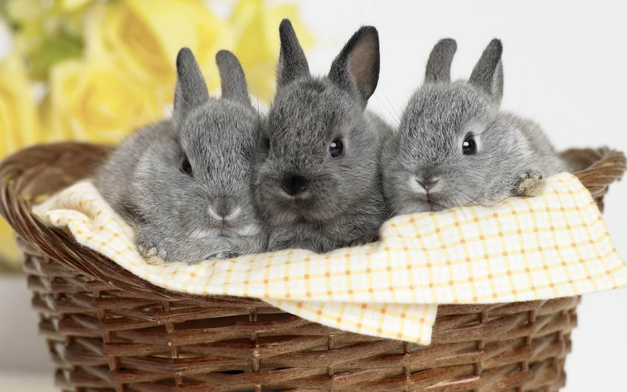 Правила ухода за декоративным кроликом в домашних условиях, полезные советы