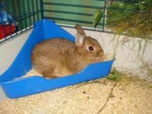 Туалет в клетку для кроликов
