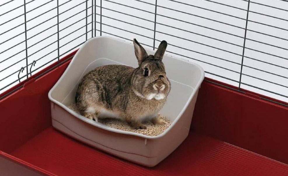 Какой выбрать туалет для кроликов и как приучить к нему зверька