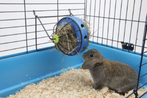 Игрушка для кролика