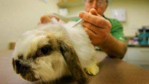 Прививка для кролика