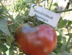 Сорт помидоров Маризол фиолетовый