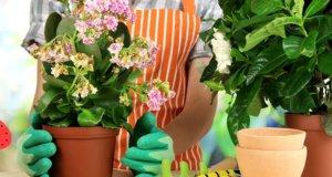 Химикаты от вредителей комнатных растений