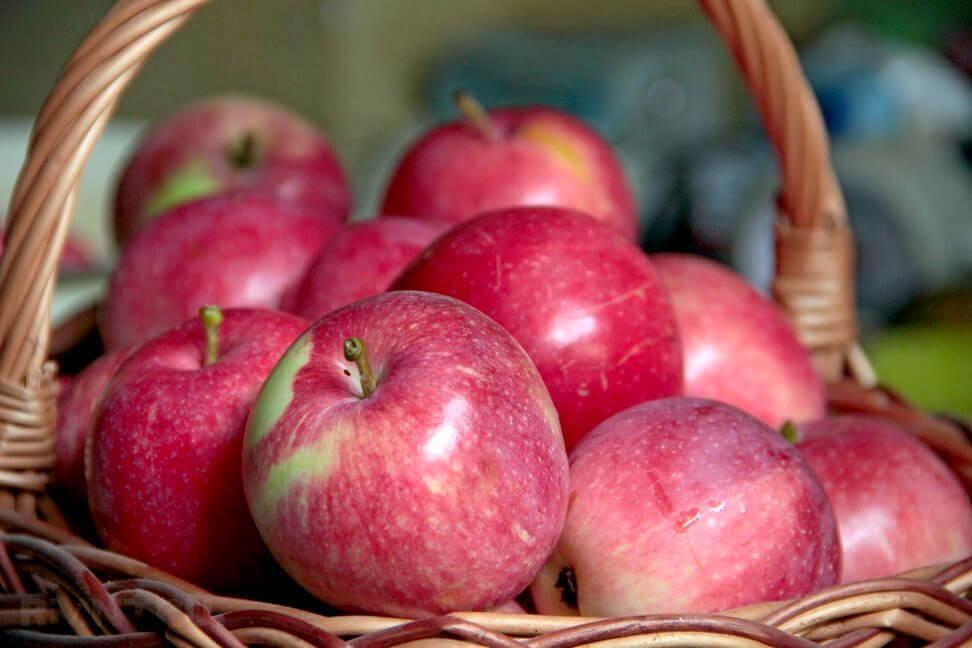 Обзор сорта яблок Слава Победителю, его преимущества и недостатки