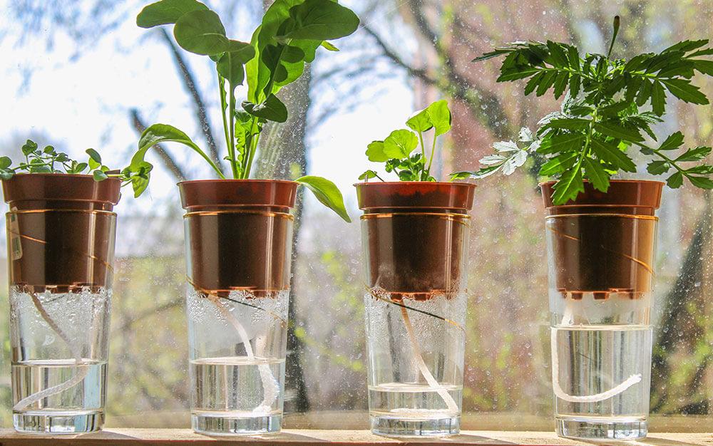 Как сделать фитильный полив растений своими руками, инструкция и рекомендации