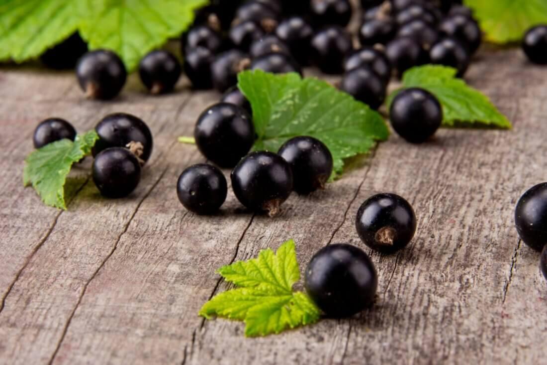Лучшие сорта черной сладкой смородины с крупными ягодами для Подмосковья