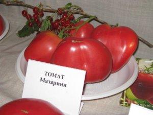 Урожай помидоров Мазарини