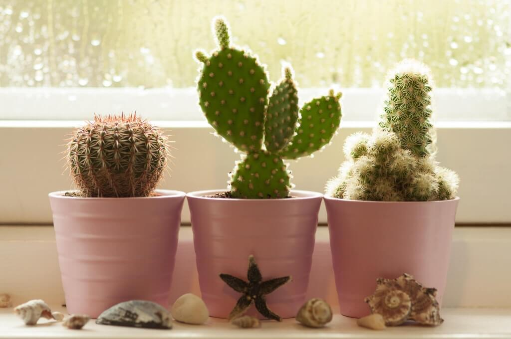 Как ухаживать за кактусом в домашних условиях в зависимости от его вида
