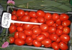 Урожай помидоров сорта Рио Гранде