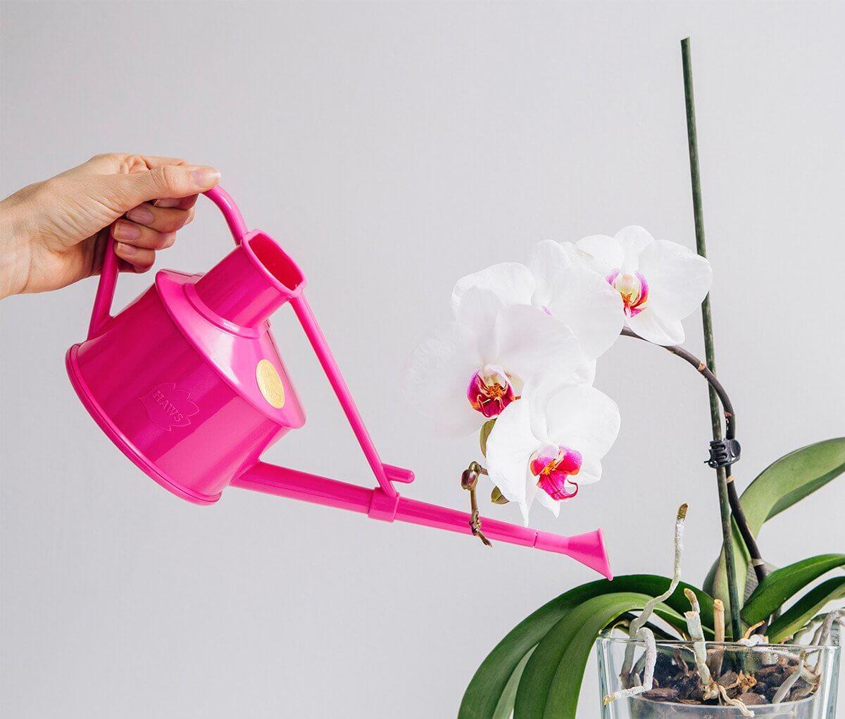 Как правильно поливать орхидеи зимой - особенности ухода в холодный период